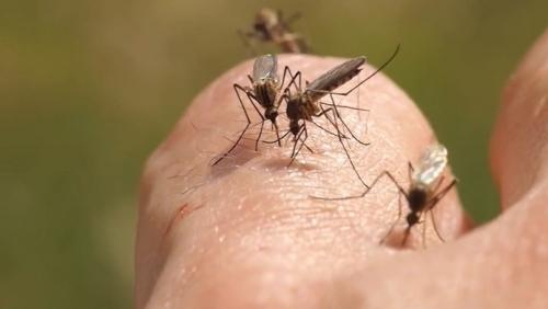 Зуд от укуса комара: как от него избавиться?